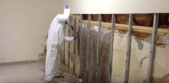 Mansfield-Texas-mold-removal
